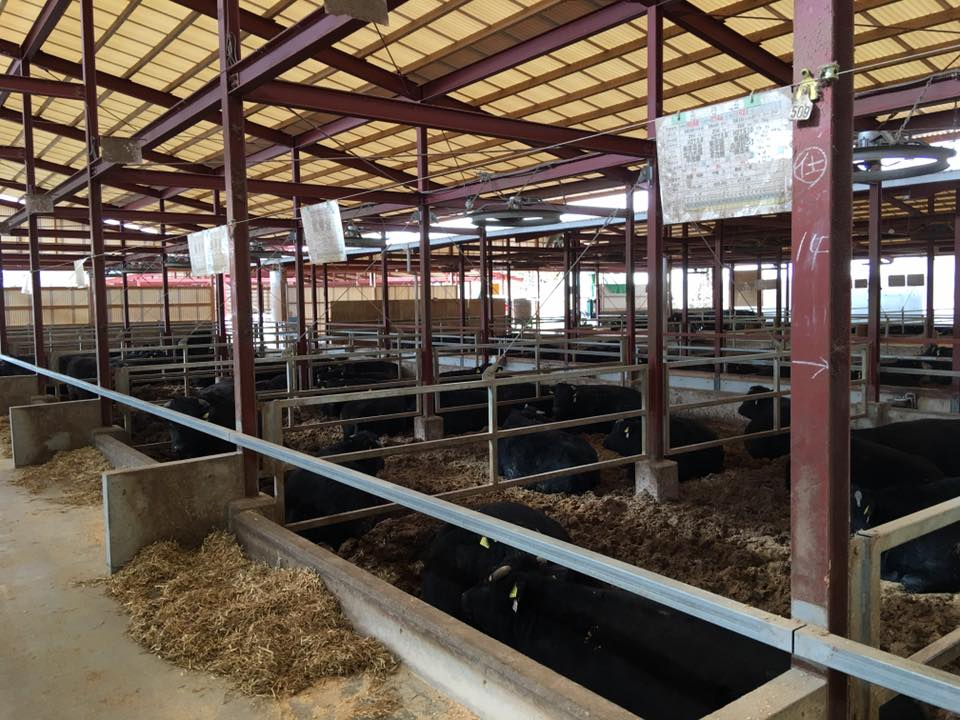 家畜運搬車の製造の流れ(床:アルミ・スロープ:ステンレス)24